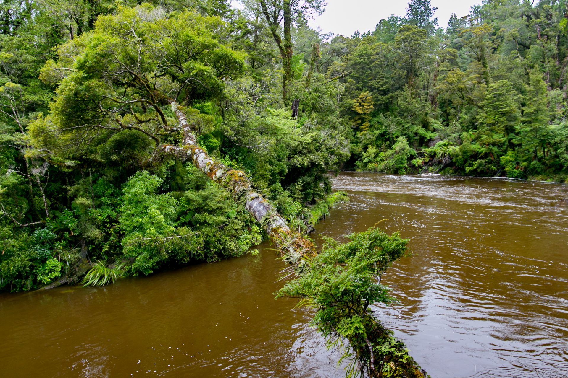 Porarari River, Paparoa National Park